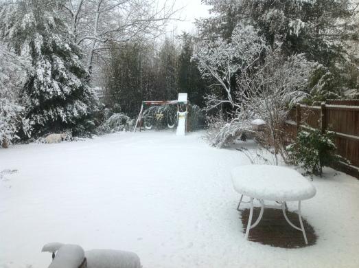 Snow in K's back yard