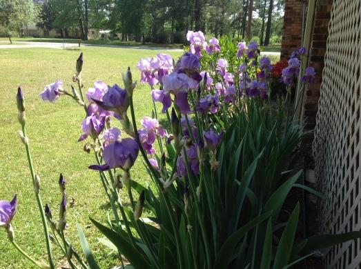 Mom's Iris's 2013